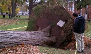 1769 Best Halloween Images On Pinterest Halloween Treats by The History Blog Blog Archive Bones Uprooted By Sandy Last