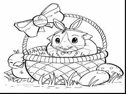 drawn guinea pig color pencil color drawn guinea pig color