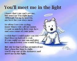 loss of pet the rainbow bridge poem pet memorial for pet loss of a pet