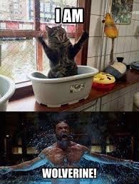 Wolverine Picture Meme - i am wolverine cat memes and comics