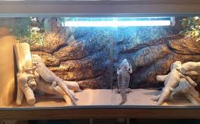 Vivarium Wood Decor Ideas For Bearded Dragon Terrarium Decor