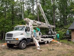50 70 foot tree doctor