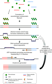 recombinase polymerase amplification for diagnostic applications