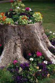 the 25 best kill tree stump ideas on pinterest tree stump