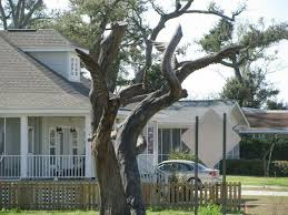 22 best trees and other carved trees on ms gulf coast