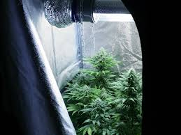 growing marijuana in small spaces part 2