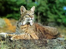Louisiana wild animals images 218 best louisiana images louisiana history jpg