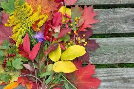 background autumn colors photograph by aleksandr volkov