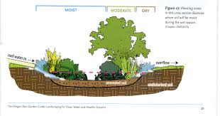 native plants in oregon if you can u0027t plant a tree plant a rain garden the creative flux