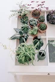 116 best p l a n t s images on pinterest plants indoor plants