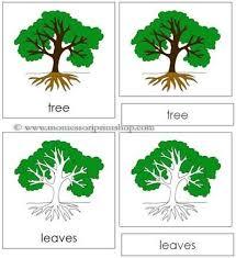 montessori tree printable tree nomenclature cards printable montessori nomenclature for