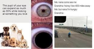 Frowning Dog Meme - funny memes on twitter 21 wholesome memes that ll turn your frown