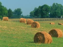 Kentucky landscapes images Summer hay le temps des moissons pinterest kentucky jpg