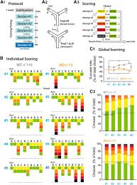 Protein Kinase A Deregulation in the Medial Prefrontal Cortex