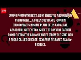 What Happens During The Light Reactions Of Photosynthesis What Happens During Photosynthesis In Plants Youtube