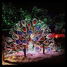 denver zoo lights hours light up christmas with a trip to the zoo petslady com