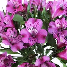 purple lillies peruvian lilies bulk flower