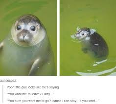 Baby Seal Meme - who would tell him to leave imgur