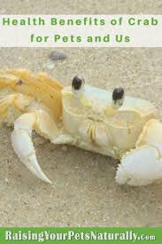 health benefits of crab for dogs cats and us healthy dog treat