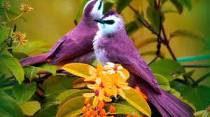 Flower Wallpaper Yellow Bird On Purple Flower Wallpaper 1920x1080 14629
