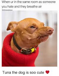 Tuna The Dog Meme - when ur in the same room as someone you hate and they breathe air