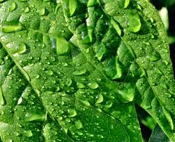foto bagnate fotografia macro up foglie bagnate