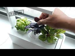 lettuce growth refill for indoor herb garden click u0026 grow