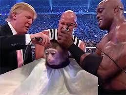 Sexy Monkey Meme - this monkey getting a fancy haircut has become a meme 18 pics smosh