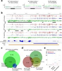 dna methylation dynamics during early plant life genome biology