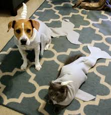 Dog Halloween Costumes Diy Narwhal Cat Dog Halloween Costume Tutorial Dog Cat