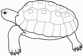 turtle coloring free printable coloring pages