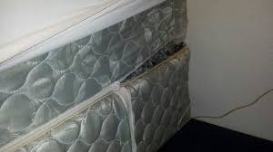 Bed Bug Pictures Of Mattresses Mattress I Always Look For Bed Bugs Didn U0027t See Any But Noticed