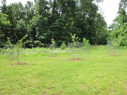 scott vegetable garden u0026 orchard 2012 hudson valley backyard