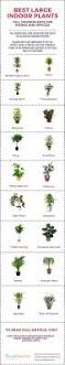 plants for the house best 25 tall indoor plants ideas on pinterest best indoor trees