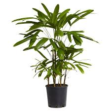 indoor palm stylehunter collective 3 indoor plants that are hard to kill