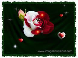 imagenes de amor con rosas animadas te amo con imagenes muy bonitas de rosas animadas en movimiento