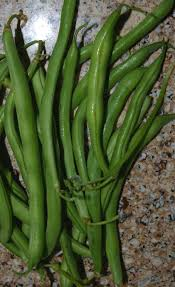 growing beans planting pole bush beans easy gardening tips the