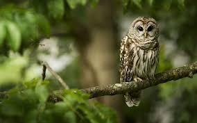 owl tree 7031327