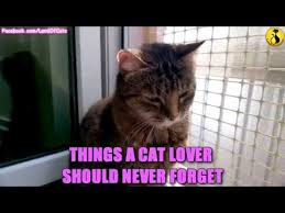 Cat Lover Meme - things a cat lover should never forget youtube