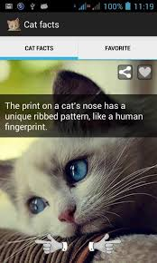 Cat Facts Meme - cat facts an app for true cat lovers the purrington post