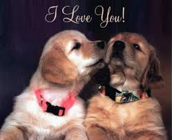 cute puppies 2 wallpapers pictures of dogs beating you at valentine u0027s day part 2 hd