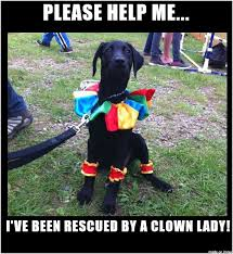 Black Lab Meme - black lab clown costume meme on imgur