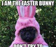Chocolate Bunny Meme - easter memes pictures photos images and pics for facebook tumblr