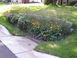 native plants for rain gardens rain gardens and other infiltration strategies