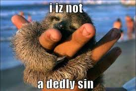 Cute Baby Animal Memes - a cute baby sloth memey com