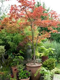 Indoor Trees For The Home by Landscaping With Gravel And Other Soft Surfacing Hgtv