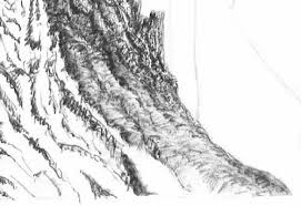 pen and ink drawing tutorial how to draw bark