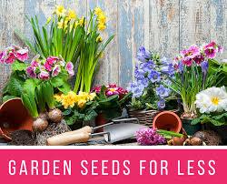 cheap flower garden for less 18 insanely cheap flower seeds that get