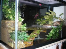 pet frog tank setup 3 would to create something like this