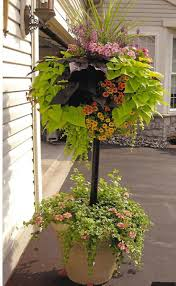 Flowering Patio Plants 103 Best Pot Patio Images On Pinterest Pots Flowers Garden And